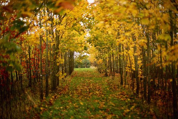 秋「Autumn Colours Delayed by Mild Weather」:写真・画像(3)[壁紙.com]