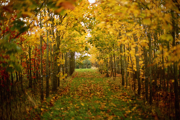 季節「Autumn Colours Delayed by Mild Weather」:写真・画像(4)[壁紙.com]