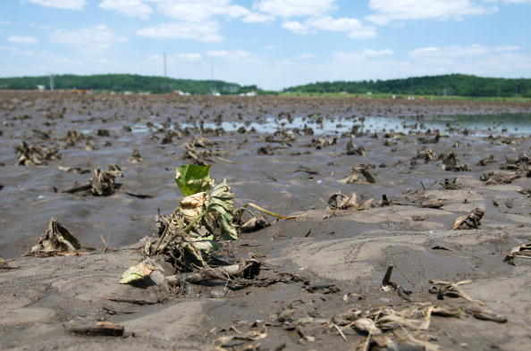 Damaged「Food Prices Expected To Rise As Midwest Flooding Damages Corn Crops」:写真・画像(9)[壁紙.com]