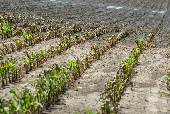 Corn - Crop「Food Prices Expected To Rise As Midwest Flooding Damages Corn Crops」:写真・画像(10)[壁紙.com]