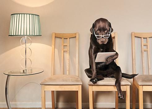 Waiting「Dog Using Tablet Computer」:スマホ壁紙(19)