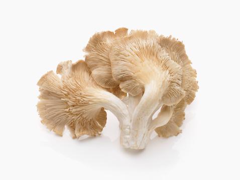 Fungus Gill「Oyster mushroom」:スマホ壁紙(16)