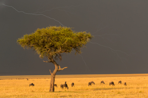 Approaching「African savannah and approaching storm」:スマホ壁紙(0)