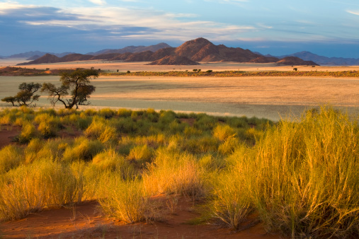 Namibia「African Savannah at Sunset」:スマホ壁紙(0)