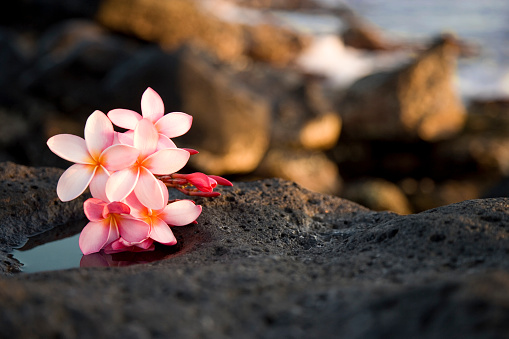 Volcanic Landscape「A bundle of pink flowers sitting on rocks」:スマホ壁紙(15)