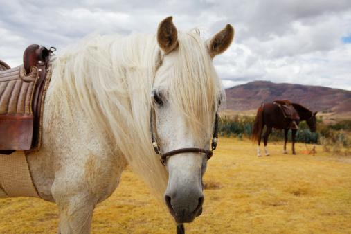 Urubamba Valley「Horses in Sacred Valley, Peru.」:スマホ壁紙(18)