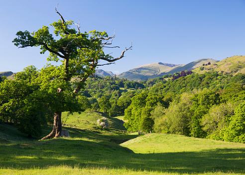 UNESCO「Verdant rural landscape near Skelwith Bridge, Elterwater, Lake District National Park, Cumbria, England, UK」:スマホ壁紙(11)