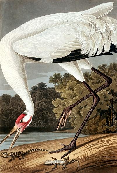 Beak「Hooping Crane」:写真・画像(12)[壁紙.com]