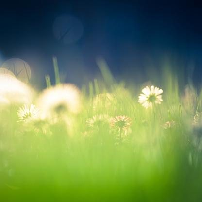花畑「美しいグリーンフィールドに daisies」:スマホ壁紙(19)