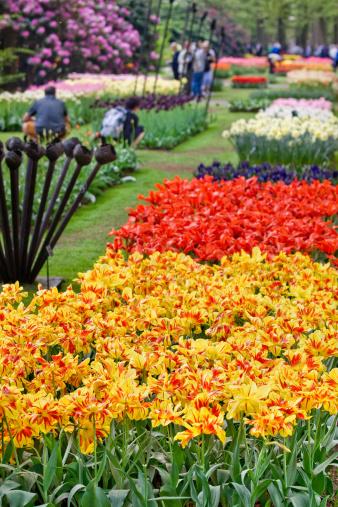 キューケンホフ公園「Beautiful garden of colorful flowers in spring - Keukenhof in Netherlands」:スマホ壁紙(3)