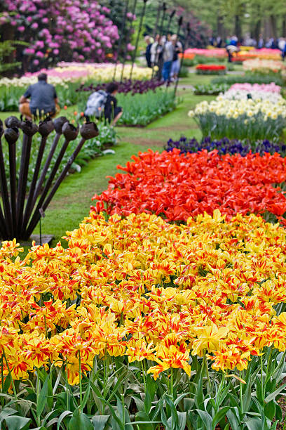 Beautiful garden of colorful flowers in spring - Keukenhof in Netherlands:スマホ壁紙(壁紙.com)