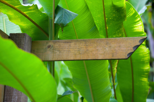 Wooden Post「Blank wooden signpost in a nature with copyspace」:スマホ壁紙(17)