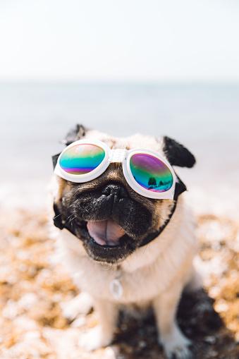 Fashion Model「Dog in glasses have vacation in Croatia」:スマホ壁紙(3)