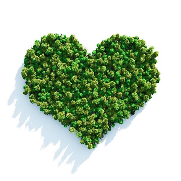 Forest Love:スマホ壁紙(壁紙.com)