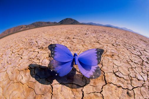Convex「Butterfly in desert」:スマホ壁紙(10)