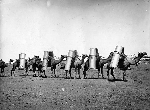 Domestic Animals「Camels Trekk」:写真・画像(2)[壁紙.com]