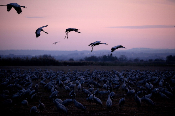 Horizontal「Migratory Birds Fly Over Lake Hula In Israel」:写真・画像(9)[壁紙.com]