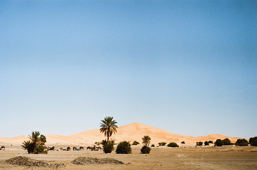 Morocco「Camels in the desert」:スマホ壁紙(16)