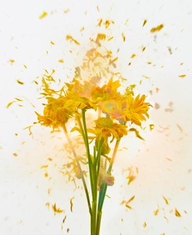 Destruction「Exploding Flowers」:スマホ壁紙(16)