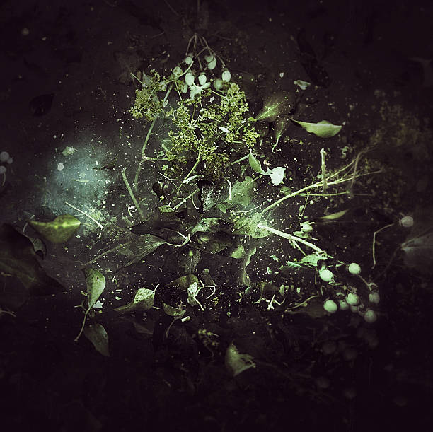 Exploding flowers:スマホ壁紙(壁紙.com)