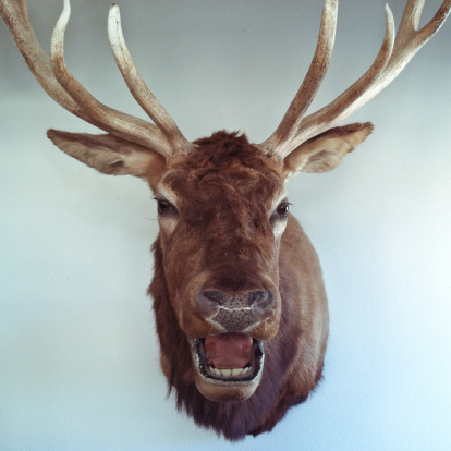 大昔の「Mounted deer head on a wall」:スマホ壁紙(19)