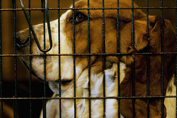 Crufts International Dog Show:ニュース(壁紙.com)