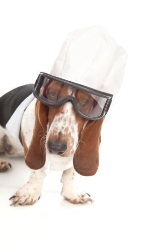 Flying Goggles「Basset Hound Aviator」:スマホ壁紙(19)