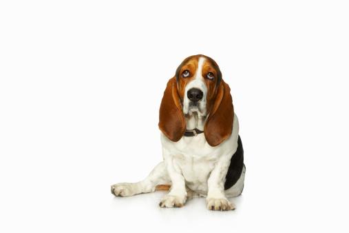 Sadness「Basset hound」:スマホ壁紙(10)