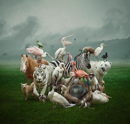Horse「Big family」:スマホ壁紙(3)