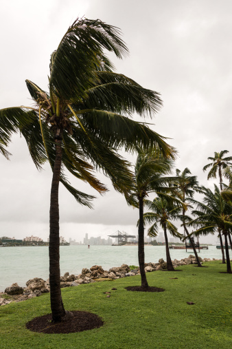 Miami Beach「ストームマイアミの」:スマホ壁紙(6)