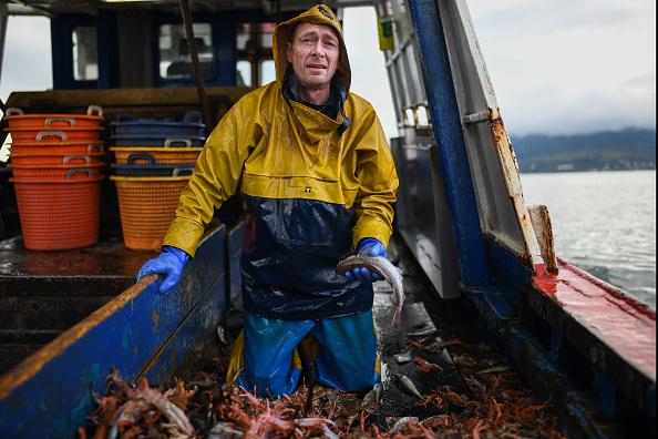Prawn - Seafood「Scottish Seafood Exports At Risk If Brexit Brings Shipping Delays」:写真・画像(19)[壁紙.com]