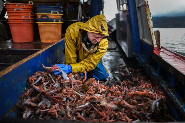 Prawn - Seafood「Scottish Seafood Exports At Risk If Brexit Brings Shipping Delays」:写真・画像(18)[壁紙.com]