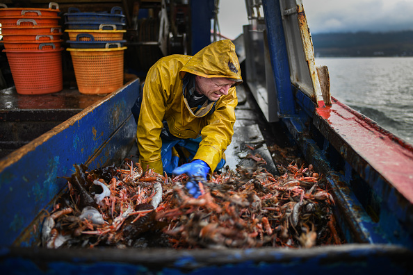 Prawn - Seafood「Scottish Seafood Exports At Risk If Brexit Brings Shipping Delays」:写真・画像(12)[壁紙.com]