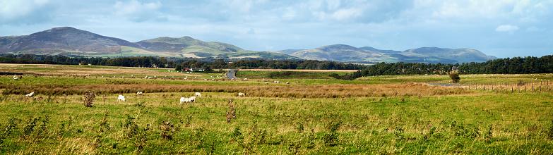スコットランド文化「ツイードヴァレイスコットランド羊はじめパノラマ」:スマホ壁紙(17)