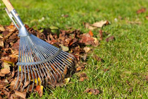 Gardening「Rake, Leaves on Grass in Garden」:スマホ壁紙(9)