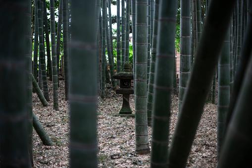Grove「Bamboo forest in Tokyo, Japan」:スマホ壁紙(15)