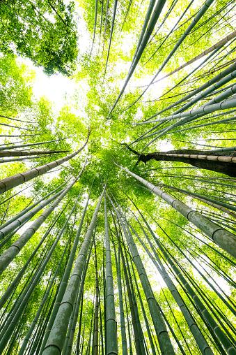 Arashiyama「bamboo forest in japan」:スマホ壁紙(18)