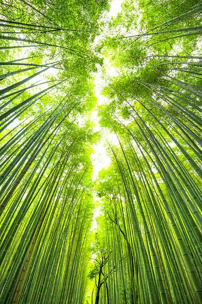 竹林京都日本:スマホ壁紙(壁紙.com)