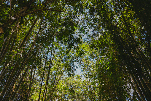 竹「竹林」:スマホ壁紙(6)