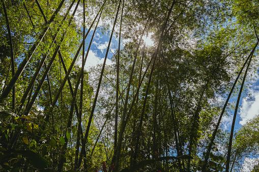 竹「竹林」:スマホ壁紙(5)
