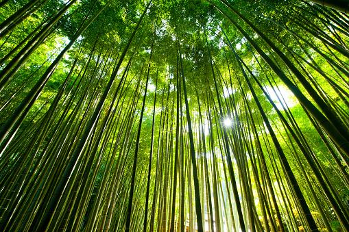 Stick - Plant Part「Bamboo Forest」:スマホ壁紙(19)