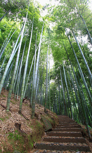 Bamboo Grove「Bamboo forest in Anji, Zhejiang Province, China」:スマホ壁紙(16)