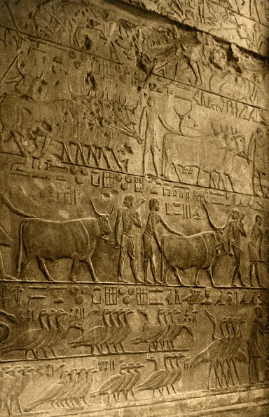 Full Frame「Saqqara - Tomb Of Ptahotep - Mural Decoration」:写真・画像(1)[壁紙.com]
