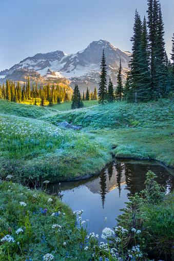 レーニア山国立公園「Mt. Rainier reflecting in tarn at dawn, Indian Henrys Hunting Ground, Mt. Rainier National Park, Washington State, USA」:スマホ壁紙(10)