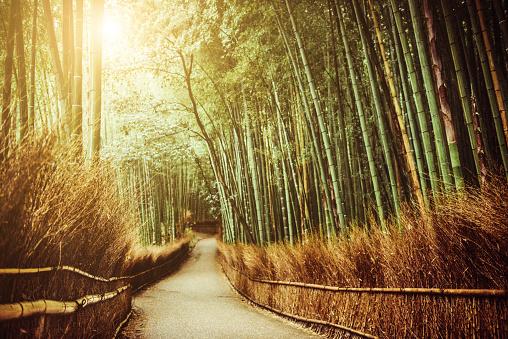 LypseJP2015「Kyoto Bambo Forest in Japan」:スマホ壁紙(16)