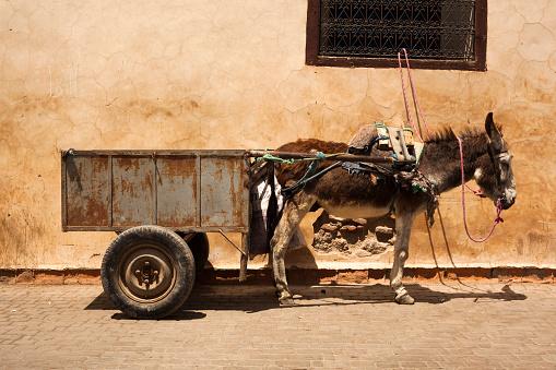 Pack Animal「Morocco, Marrakesh, donkey with trailer」:スマホ壁紙(4)