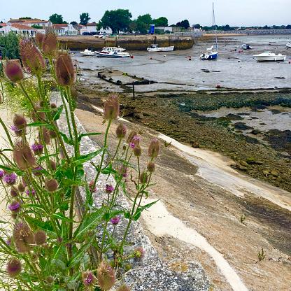 Nouvelle-Aquitaine「Low tide on Ile-de-Ré, France」:スマホ壁紙(18)