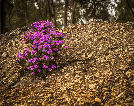 Granite - Rock「Pink flowers」:スマホ壁紙(1)