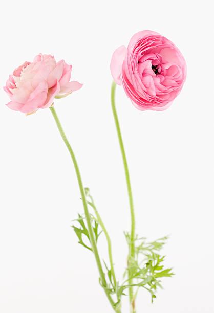 Pink flowers:スマホ壁紙(壁紙.com)