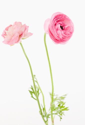 Plant Bulb「Pink flowers」:スマホ壁紙(17)